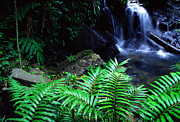 Tropical Rainforest Digital Art Prints - El Yunque National Forest Print by Thomas R Fletcher