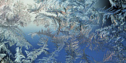 Wintry Posters - Frost on a Windowpane Poster by Thomas R Fletcher