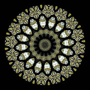 Brass Photos - Kaleidoscope Ernst Haeckl Sea Life Series by Amy Cicconi