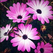 Closeup Metal Prints - Flowers Metal Print by Les Cunliffe