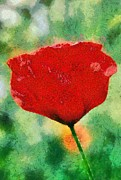 Natural World Paintings - Poppy flower by George Atsametakis