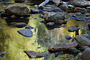 Tam Ryan - West Fork Oak Creek