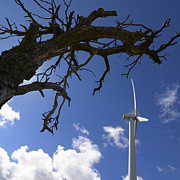 Dead Tree Posters - Wind turbine Poster by Bernard Jaubert
