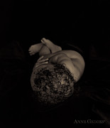 Black-and-white Metal Prints - Untitled Metal Print by Anne Geddes