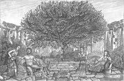Apple Tree Drawings Metal Prints - 11th-Labor-of-Hercules-The-Apples-of-Hesperides Metal Print by Pierre Salsiccia