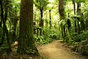 Outdoors Photos - Forest by Les Cunliffe