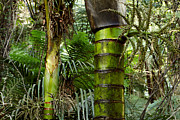 Vegetation Metal Prints - Jungle Metal Print by Les Cunliffe