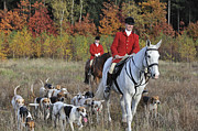 Foxhound Photos - 120206p092 by Arterra Picture Library
