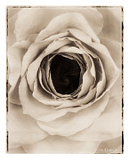 Tone Prints - Untitled Print by Anne Geddes