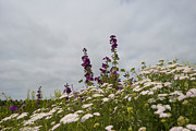 Flevoland Art - Wild flowers in a field in summer by Jan Marijs