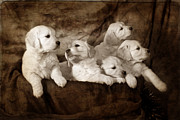 Pups Photos - Vintage festive puppies by Angel  Tarantella