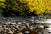 Rushing Prints - Williams River Autumn Print by Thomas R Fletcher
