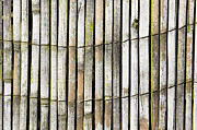 Wood Background Print by Tom Gowanlock