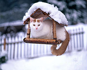 Hans Reinhard - Domestic Cat