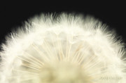 White Flower Prints - Untitled Print by Anne Geddes