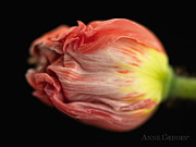 Flower Prints - Untitled Print by Anne Geddes