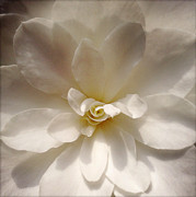 Flower Photography Photos - Flower by Les Cunliffe