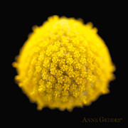 Flower Photo Prints - Untitled Print by Anne Geddes