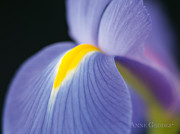 Purple Flower Photos - Untitled by Anne Geddes