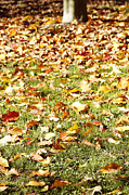 Yellow Leaves Photo Prints - Autumn Print by Les Cunliffe