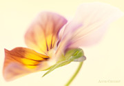 Flower Art - Untitled by Anne Geddes