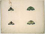 Science Photo Library - Butterflies, 18th...