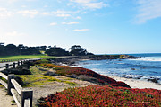 Golf Green Framed Prints - 17 Mile Drive Shore Line Framed Print by Barbara Snyder