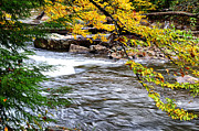 Trout Photo Posters - Williams River Autumn Poster by Thomas R Fletcher