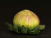 Bud Art - Untitled by Anne Geddes