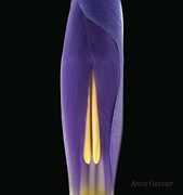 Color Purple Prints - Untitled Print by Anne Geddes