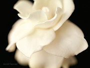 White Flower Photos - Untitled by Anne Geddes
