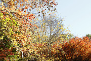 Autumn Metal Prints - Autumn  Metal Print by Les Cunliffe