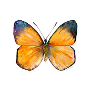 19 Delias Anuna Butterfly Print by Amy Kirkpatrick
