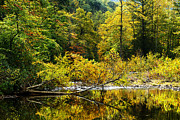 Williams River Scenic Backway Framed Prints - Williams River Autumn Framed Print by Thomas R Fletcher