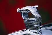 Chrome Framed Prints - 1931 Ford Quail Hood Ornament Framed Print by Carol Leigh