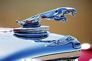 1948 Prints - 1948 Jaguar 2.5 litre Drophead Coupe Hood Ornament Print by Jill Reger