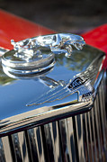 Collector Hood Ornament Posters - 1948 Jaguar Mark IV Drophead Coupe Hood Ornament Poster by Jill Reger