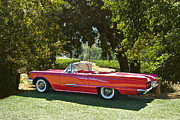 Family Car Posters - 1958 Ford Thunderbird Convertible Poster by Dave Koontz