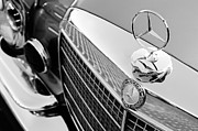 Collector Hood Ornament Metal Prints - 1971 Mercedes-Benz 280SE 3.5 Cabriolet Hood Ornament - Grille Emblem Metal Print by Jill Reger