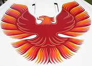 Red And Orange Feathers On Front Posters - 1979 Pontiac Firebird Emblem Poster by John Telfer