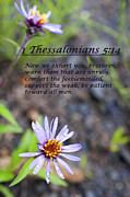 Thessalonians Prints - 1Thessalonians chapter5 verse14 Print by Arlene Rhoda Nanouk