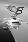 Bentley Posters - 1950 Bentley MK VI Sports Saloon Hood Ornament Poster by Jill Reger