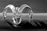 Ram - 1952 Dodge Ram Hood Ornament by Jill Reger