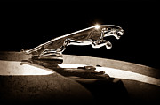 Collector Hood Ornament Posters - 1961 Jaguar Kougar Hood Ornament Poster by Jill Reger
