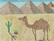 Colored Pencil Landscape Drawings Drawings - A camel in the desert by Miles The Artist