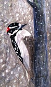 Woodpeckers Paintings - A Downy Woodpecker by Angela Davies