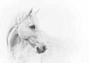 Equine Prints - A Gentle Soul Print by Ron  McGinnis