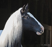 Gypsy Prints - A Lovely Horse Print by Terry Kirkland Cook