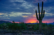 Pink Skies Posters - A Sonoran Desert Morning  Poster by Saija  Lehtonen