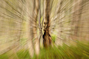 Trees Abstract Tree Lines Forest Wood Prints - Abstract forest scenery  Print by Gry Thunes